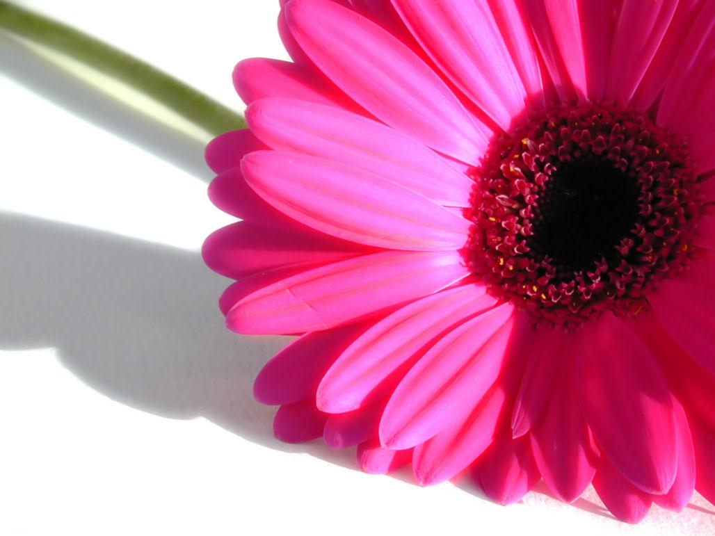 Bloemen Achtergronden 187 Animaatjes Nl