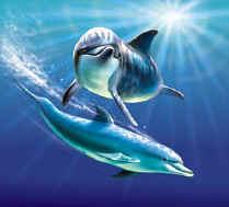 Dolfijnen Achtergronden