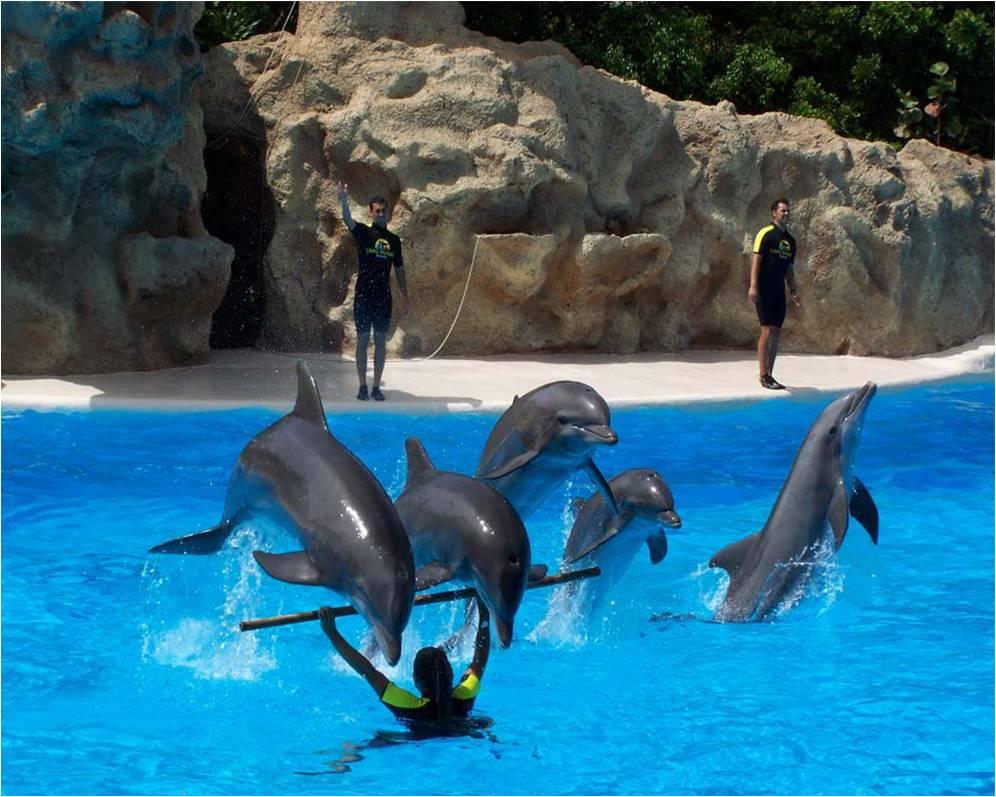 Dolfijnen Achtergronden Animaatjes Nl