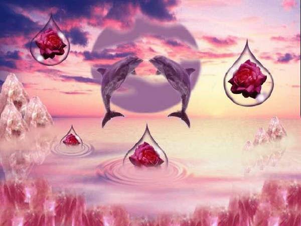 Dolfijnen Achtergronden 187 Animaatjes Nl