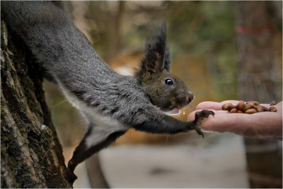 Eekhoorns Achtergronden