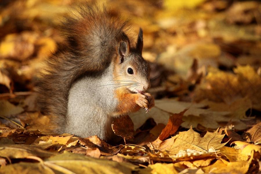 Eekhoorns Achtergronden 187 Animaatjes Nl