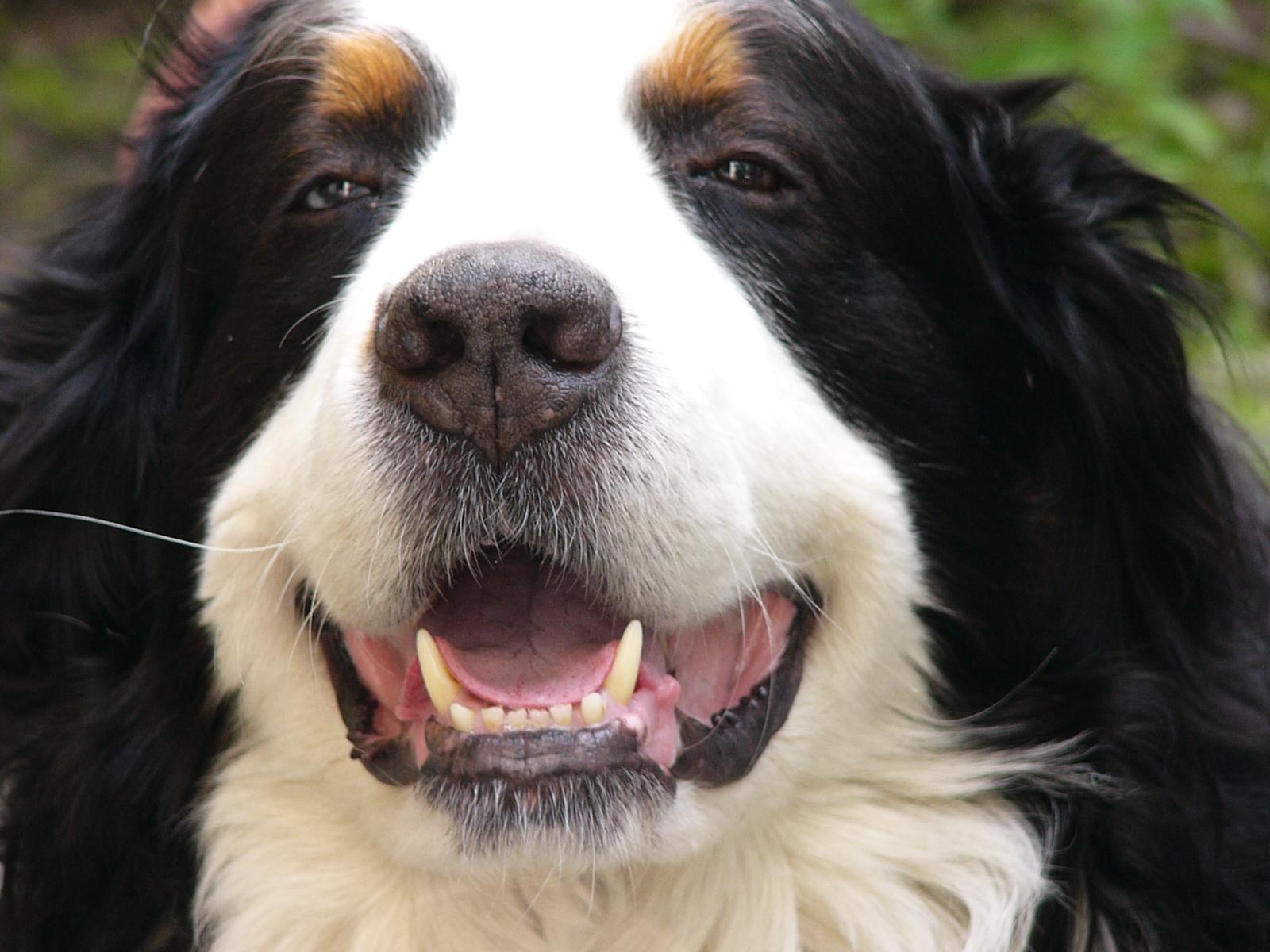 Honden Achtergronden