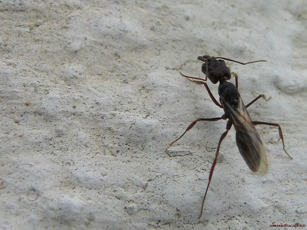 Insecten Achtergronden