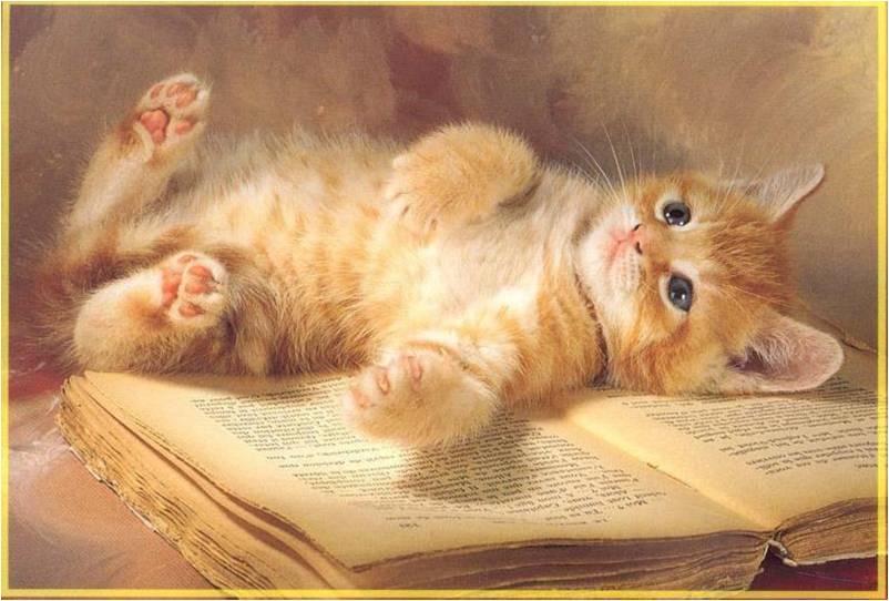 Katten Achtergronden