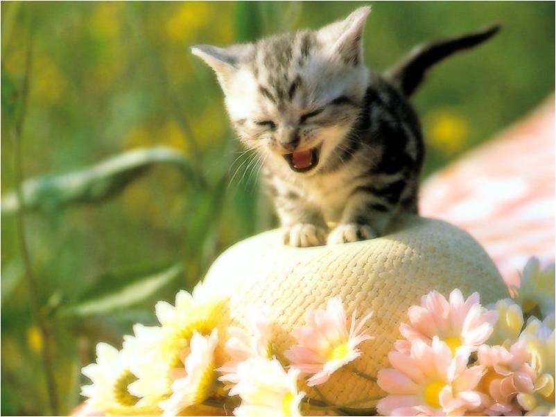 Katten Achtergronden Animaatjes Nl