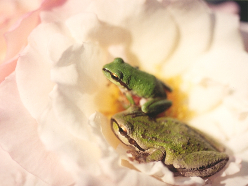 leuke achtergronden - animals in the house.nl: https://sites.google.com/site/savingfrogs/leuke-achtergronden