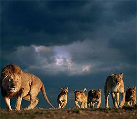 Leeuwen Achtergronden