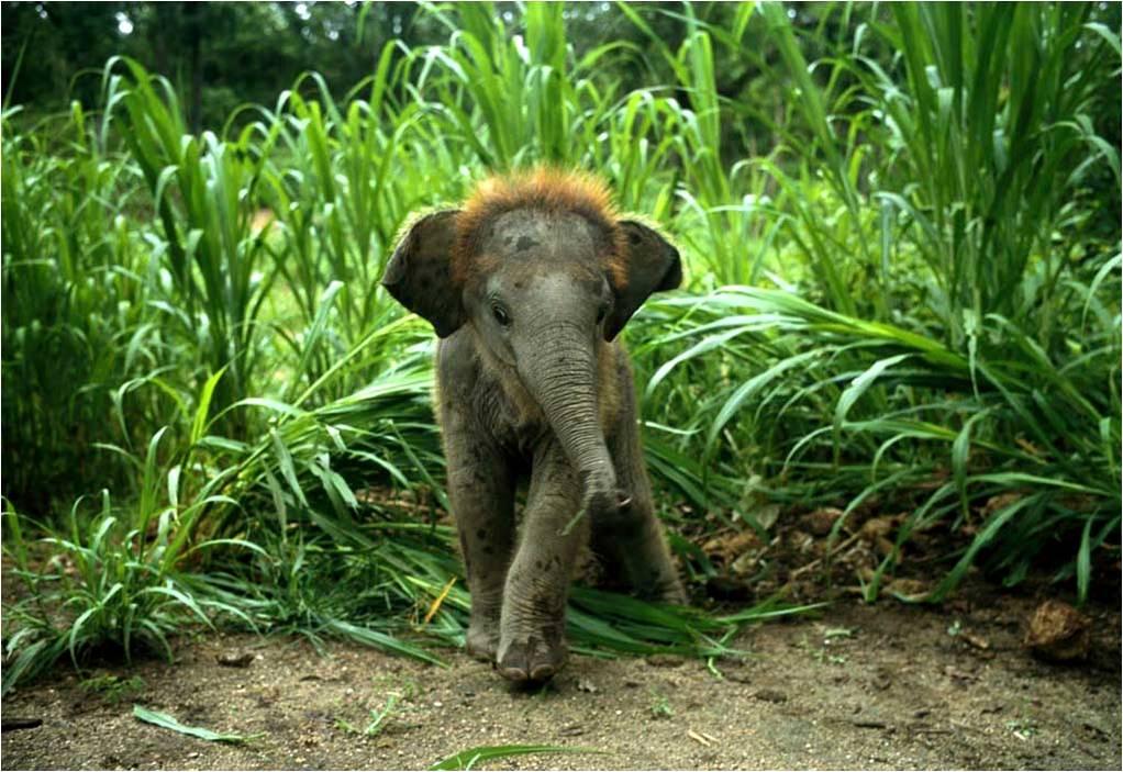 olifanten achtergronden bureaublad - photo #33
