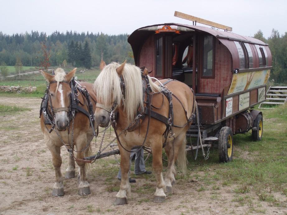 Paarden Achtergronden