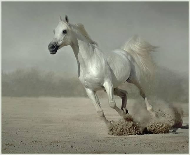 Verrassende Kinderkamer Paarden : Achtergronden van paarden parksidetraceapartments