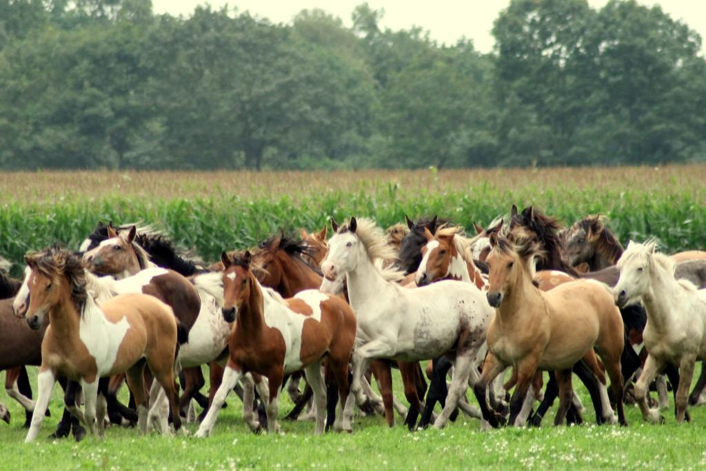 Paarden Achtergronden 187 Animaatjes Nl