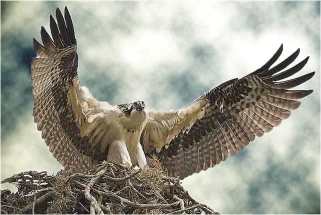 Achtergronden Roofvogels 187 Animaatjes Nl