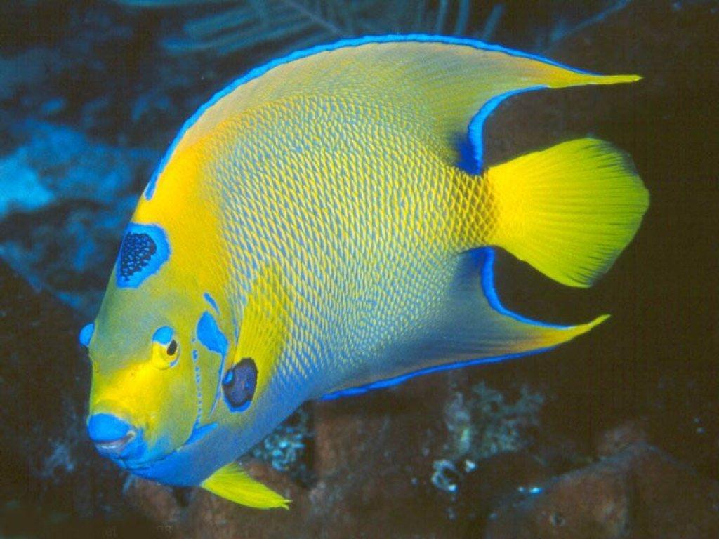 Vissen Achtergronden