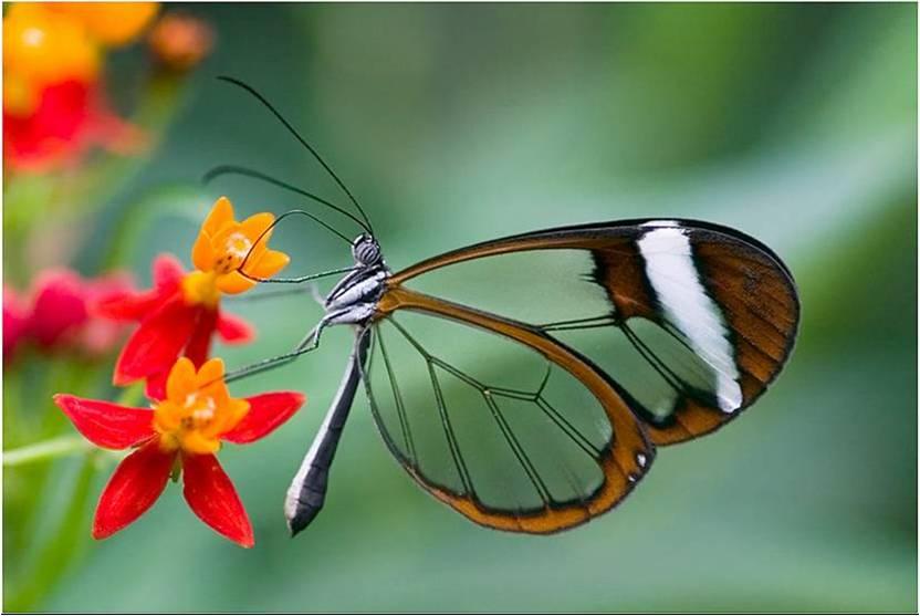 Vlinders Achtergronden 187 Animaatjes Nl