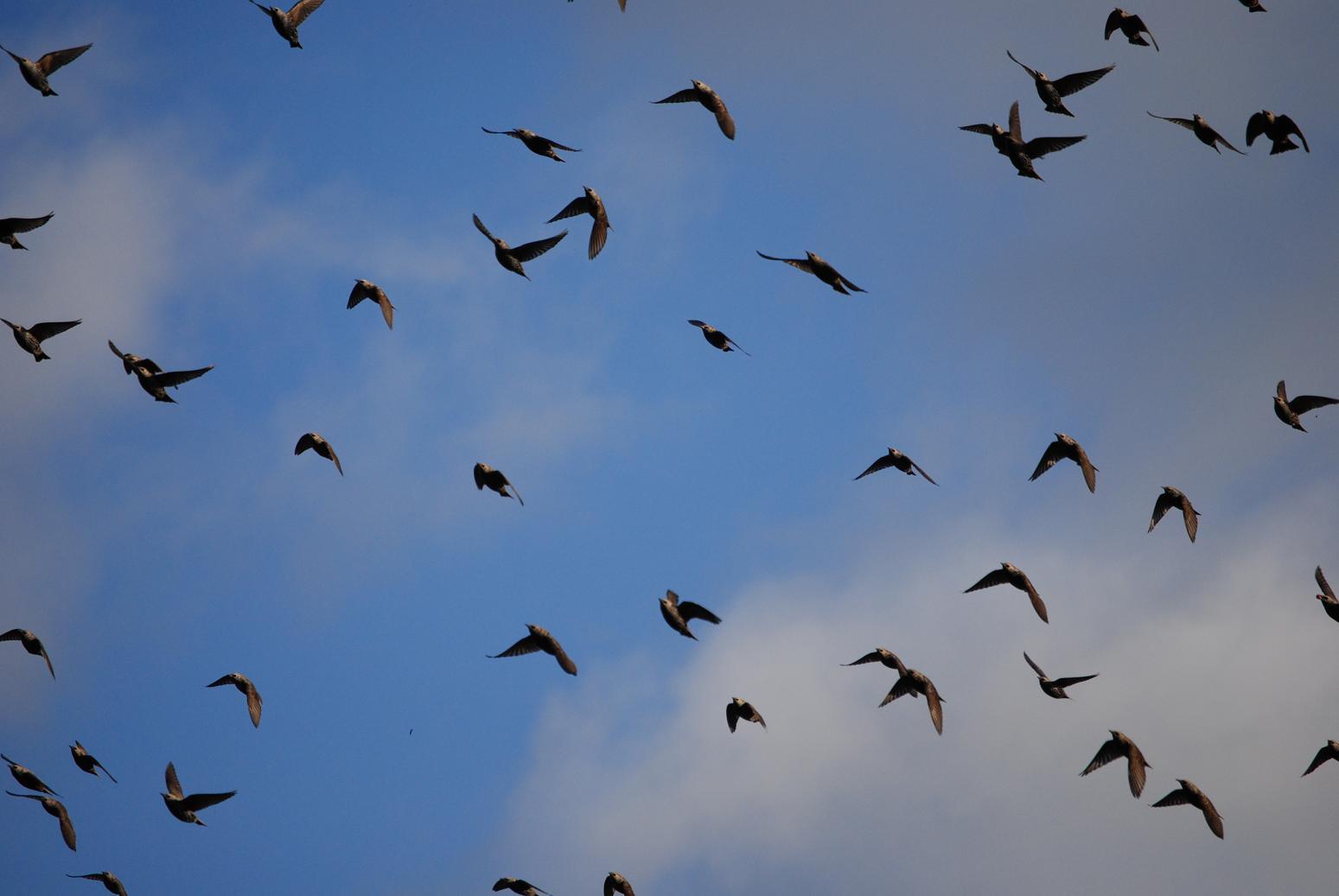 Vogels Achtergronden 187 Animaatjes Nl