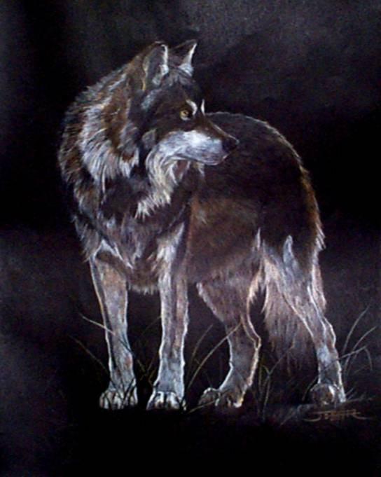 Achtergronden Wolves