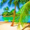 Palm boom Avatars
