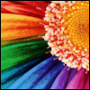 Regenboog avatars