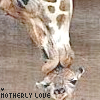 Dieren Avatars Giraffe