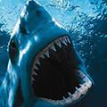 Dieren Haaien Avatars