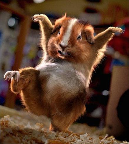 Dieren Avatars Hamster