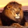 Dieren Avatars Leeuw