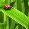 Dieren Avatars Lieveheerstbeestje