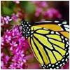 Dieren Avatars Vlinder