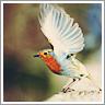 Dieren Avatars Vogel