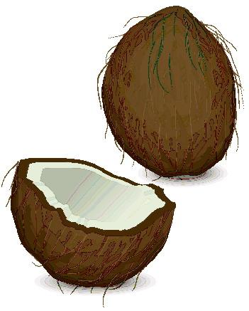 Kokosnoot cliparts - Dessin noix de coco ...