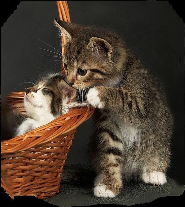 Katten Dieren   Animaatjes nl