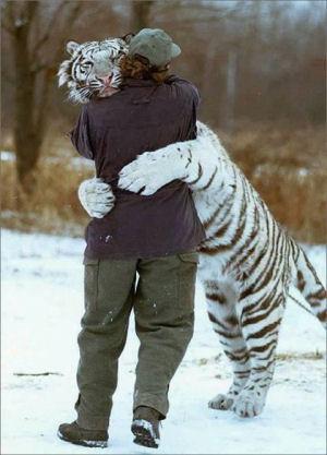 Witte tijger dieren