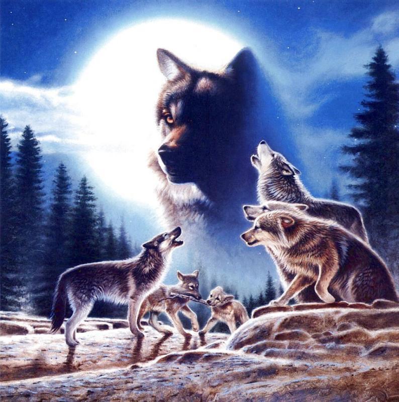 Wolven dieren