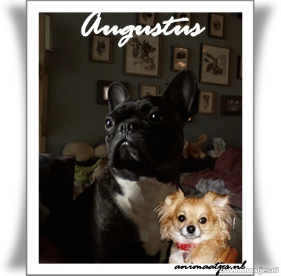 Augustus Facebook plaatjes