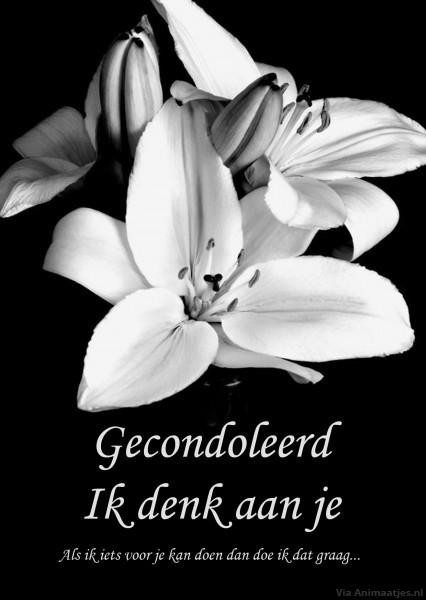 gecondoleerd plaatjes 187 animaatjes nl
