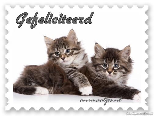 gefeliciteerd kaart facebook Gefeliciteerd Facebook Plaatjes » Animaatjes.nl gefeliciteerd kaart facebook
