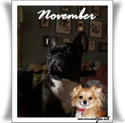 November Facebook plaatjes