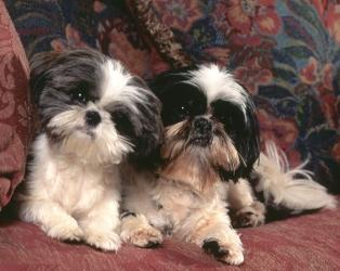 Boomer Honden Plaatjes 187 Animaatjes Nl