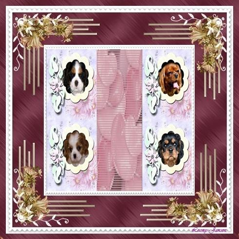 Honden plaatjes Cavelier