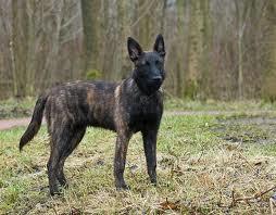 Hollandse Herder Honden Plaatjes 187 Animaatjes Nl