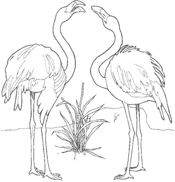 Flamingo Kleurplaten Dieren kleurplaten