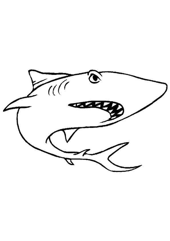 Haaien kleurplaten