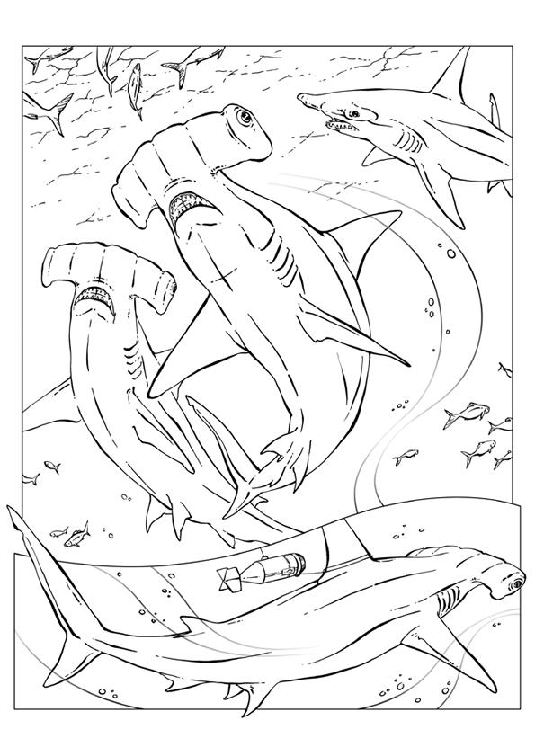 Haaien Kleurplaat Dieren Kleurplaat Animaatjes Nl