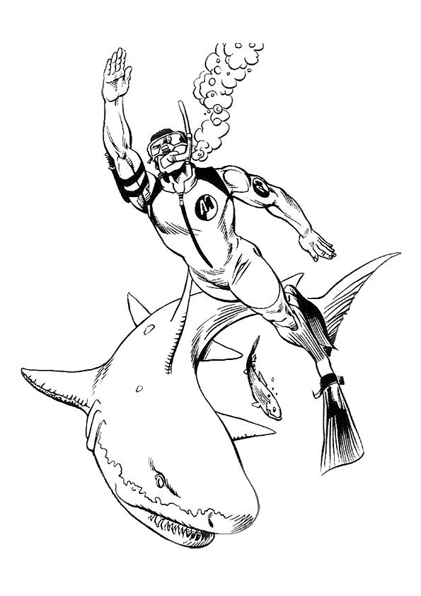 haai met een duiker