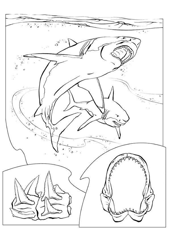 Haaien Kleurplaten Dieren kleurplaten