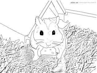 Kleurplaat Hamster