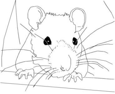 hamstersimulator startet nicht