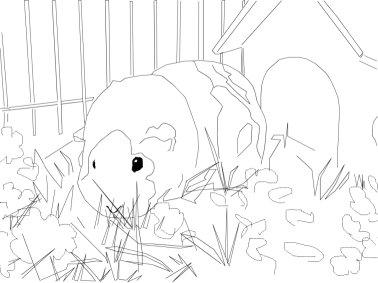 Hamsters Kleurplaat Dieren Kleurplaat 187 Animaatjes Nl