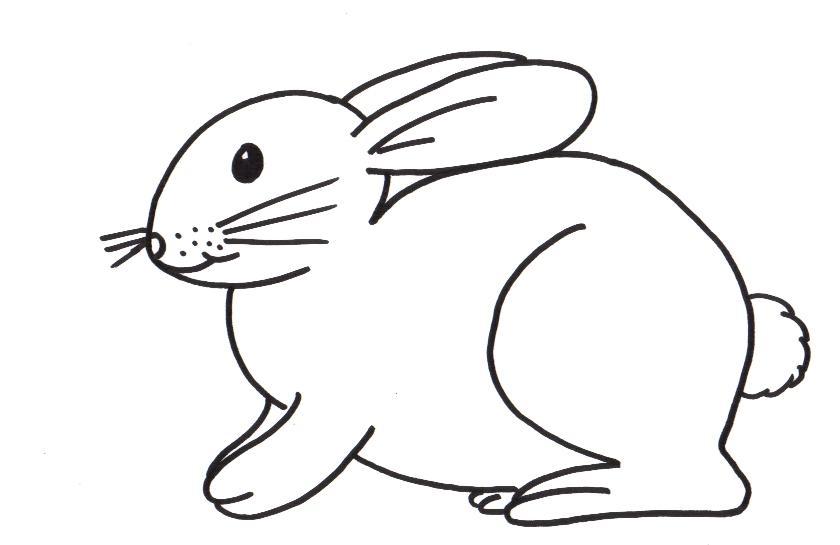 kleurplaten dieren konijn